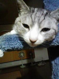 齋藤の愛猫