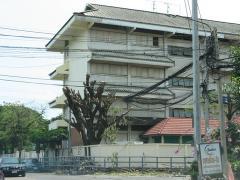 タイの木の手入れ01