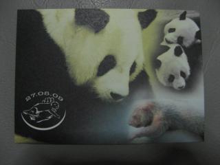 パンダの赤ちゃん絵葉書01