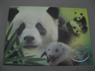パンダの赤ちゃん絵葉書02