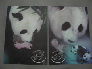 パンダの赤ちゃん絵葉書03