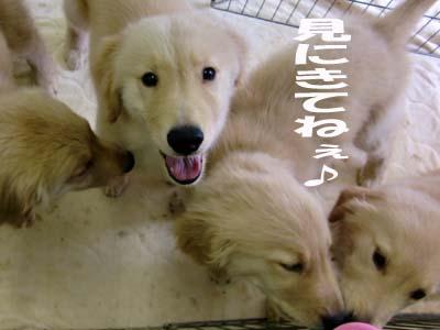 010_20090805171057.jpg