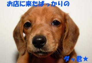 1_20080716151540.jpg
