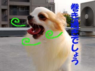 DSC_0203のコピー