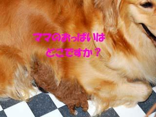 DSC_0161のコピー