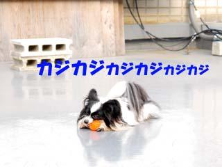 DSC_0337のコピー
