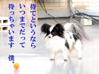 DSC_0313のコピー