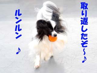 DSC_0306のコピー