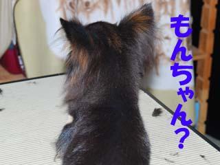 もんちゃん?