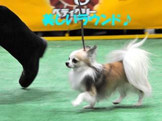単犬種合同本部展 KKラウンドのコピー