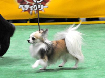 単犬種合同本部展 KKラウンド