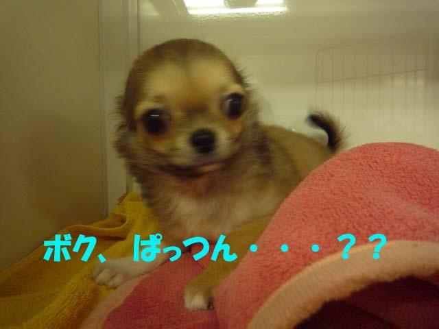 20081204_20081205164247.jpg