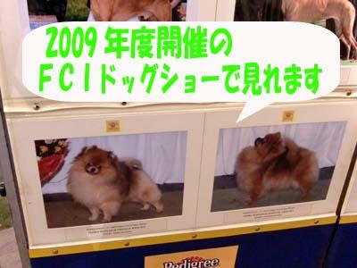 CIMG0040のコピー