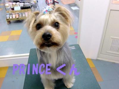 PRINCE君