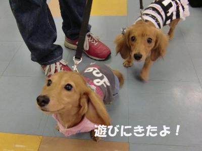 ナナちゃん&ムーちゃん