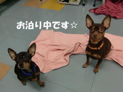 モニカちゃん&クレアちゃん