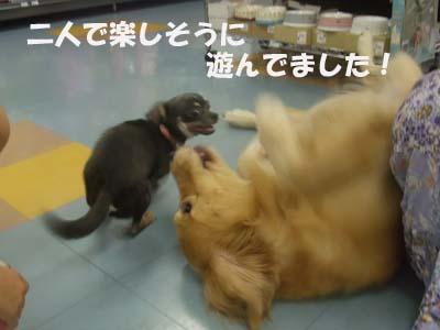チロちゃん&ウィンちゃん