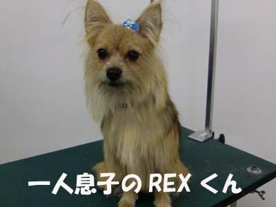 REXくん