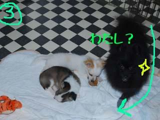 3_20080521174705.jpg