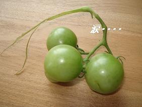 トマトがぁ~><