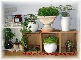 室内の植物達