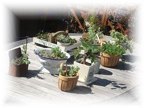植物達の日光浴