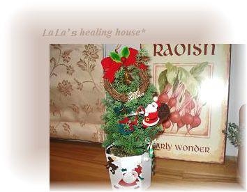 ミニコニファーがクリスマスモードに♪