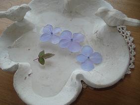 紫陽花の葉っぱ