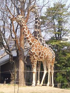 動物園 004-001