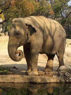 動物園 015-001