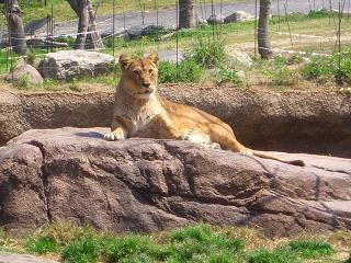 動物園 006-001