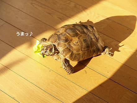 071107_kohaku2.jpg