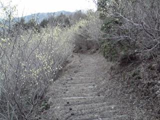 20080316j.jpg