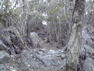 20080403b.jpg