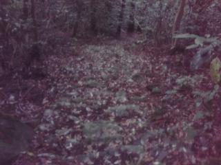 20080601b.jpg