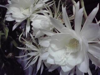 20080901b.jpg
