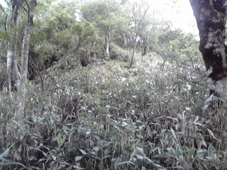 20080914c.jpg