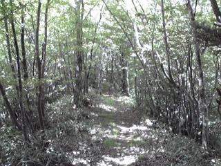 20090531b.jpg