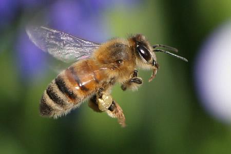 全米で謎のミツバチ集団失踪