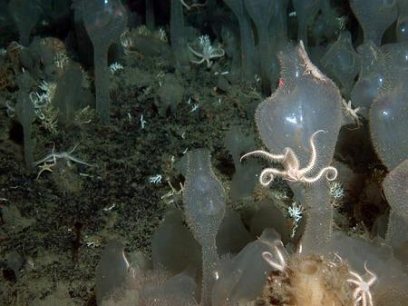 ヒトデ、甲殻類の一種、枝状に伸びる固着性生物?がいる