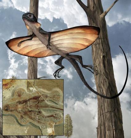 空するトカゲの化石発見=1億2000万年前の地層から-中国