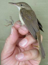 幻の鳥、140年ぶりタイで確認