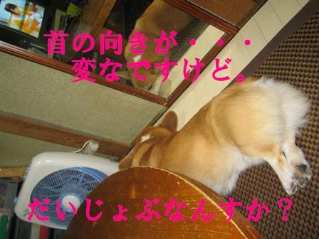 IMG_9491-2.jpg