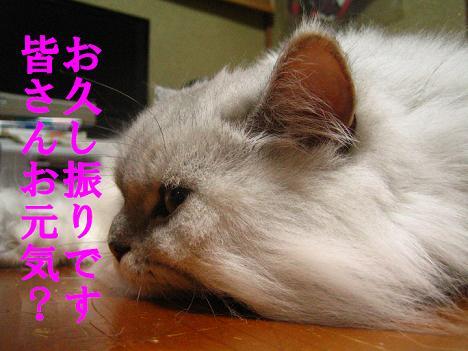 IMG_9524-2.jpg