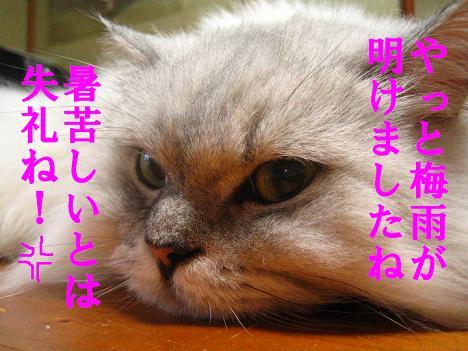 IMG_9526-2.jpg