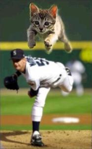 Nya-baseball.jpg