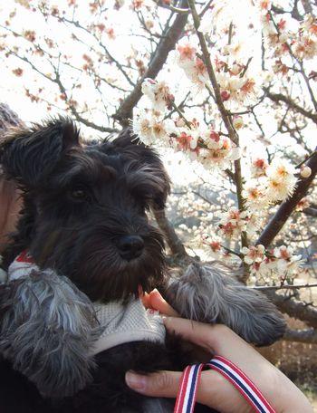 公園の梅の木とパチリ