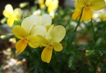 2008黄色5