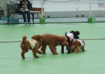 GWららぽ犬いっぱい