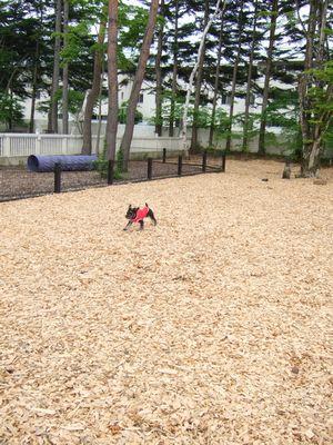軽井沢ドッグカフェ1